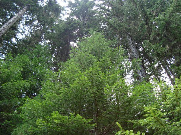 Дърветата – мълчаливи участници в кръговрата на живота