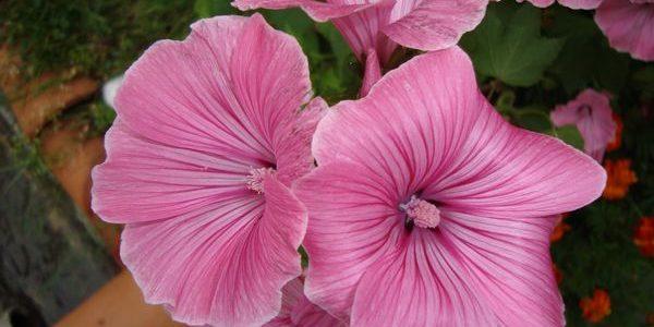 Момичето с необикновено сърце, което видяло красивото в едно цвете