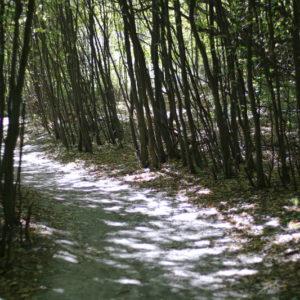 Бистрица до Железница