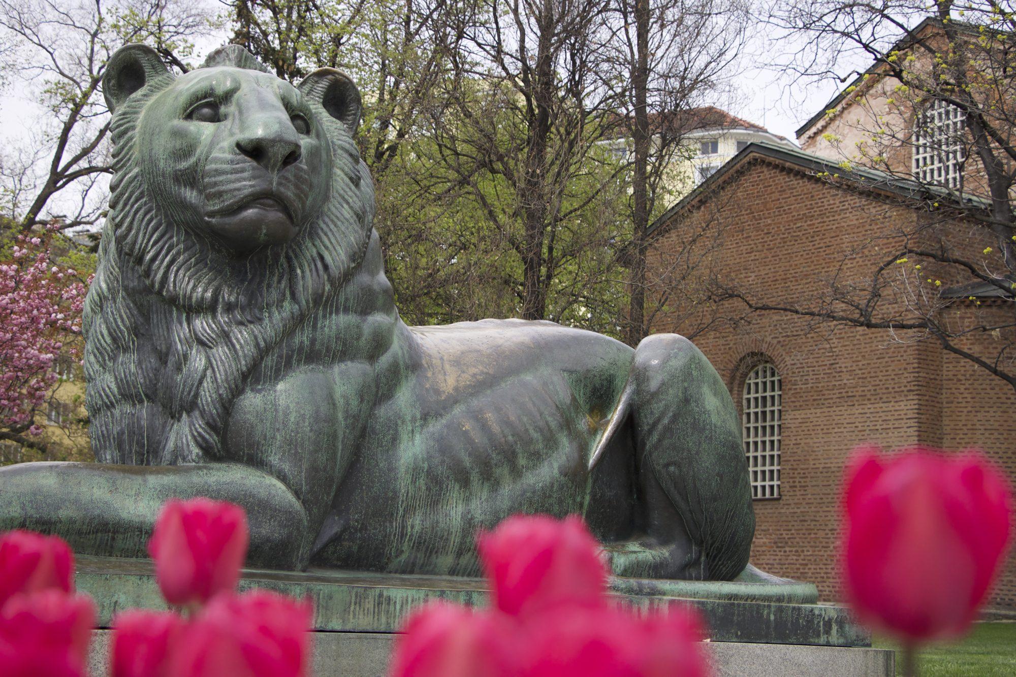 Великан в покой – лъвът оцелял след бомбардировка
